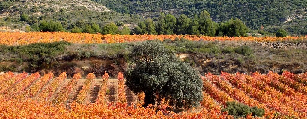 Actividades de tierra en Rioja Alavesa