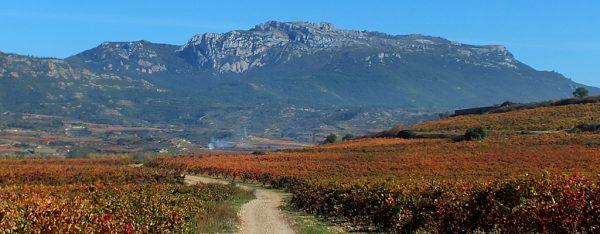 Camino de Santiago en Rioja Alavesa