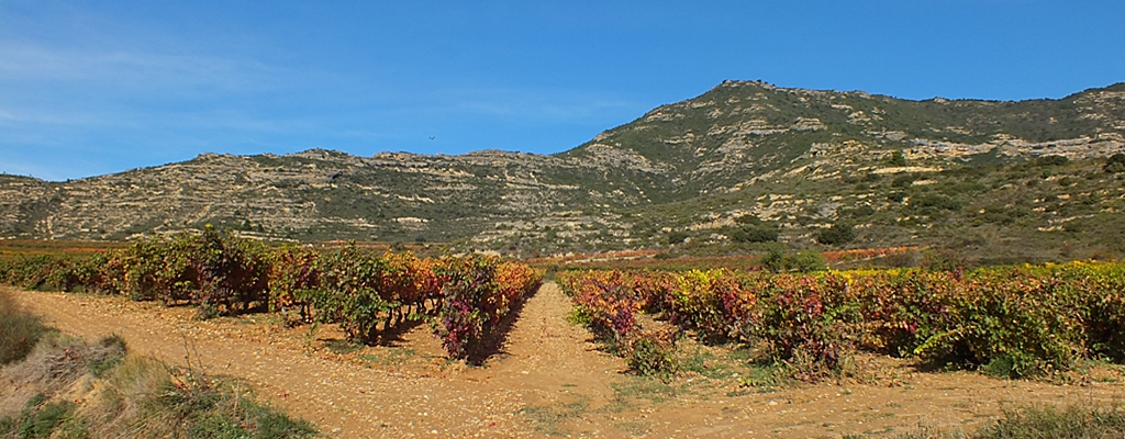 Camino Ignaciano en Rioja Alavesa