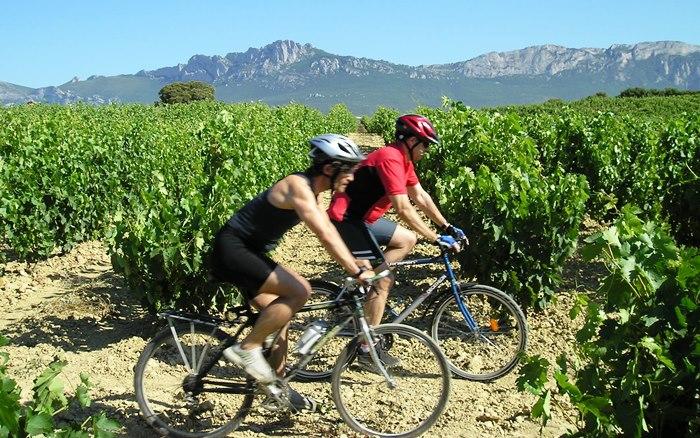 Dos personas en bicicleta atravesando el viñedo de Rioja Alavesa en un día soleado