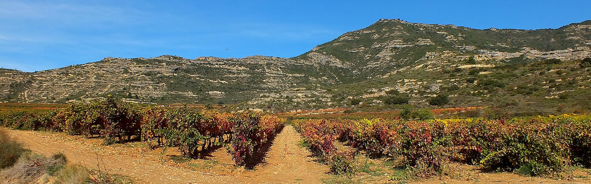 Rutas de vino en Rioja Alavesa y Rioja Alta