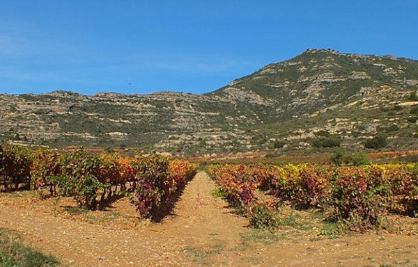 Camino Ignaciano en Rioja