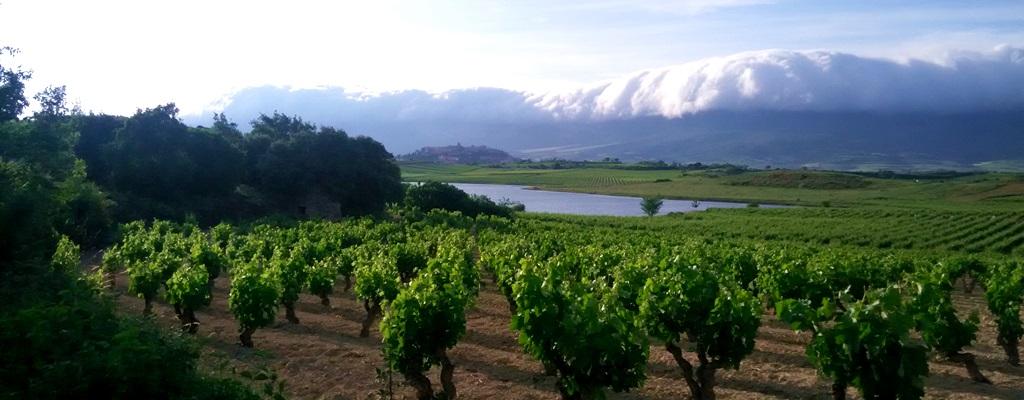 actividades de tierra en Rioja